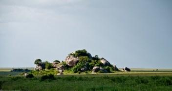 Tanzania-Serengeti_National_Park-045-DSC_5248