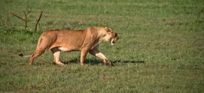 Tanzania-Serengeti_National_Park-046-DSC_5309
