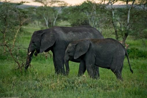 Tanzania-Serengeti_National_Park-056-DSC_5271