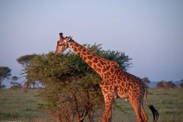 Tanzania-Serengeti_National_Park-099-DSC_5791