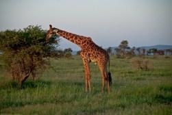 Tanzania-Serengeti_National_Park-114-DSC_5784