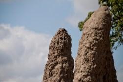 Tanzania-Tarangire_National_Park-002-DSC_6152