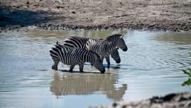 Tanzania-Tarangire_National_Park-033-DSC_6125