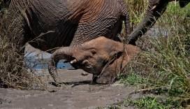 Tanzania-Tarangire_National_Park-044-DSC_6246