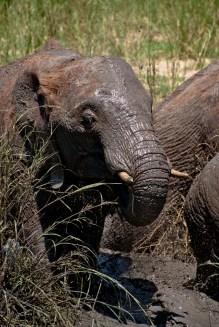 Tanzania-Tarangire_National_Park-045-DSC_6244