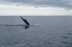 2016-02-08-13-Madeira-DSC_1790