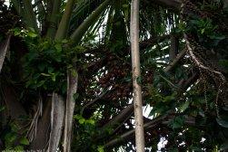 brasil-mato-grosso-cuiaba-lagoa-das-araras-dsc_9064