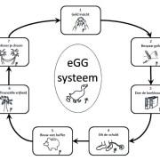 Het eGG systeem