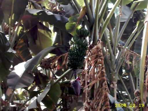 Бананы с цветком