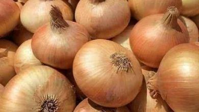 "Photo of ""الزراعة"" ترد على تراجع صادرات البصل: المصري معروف بجودته"