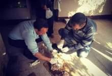 "Photo of مطاردة الكلاب الضالة في القليوبية بـ""السم"" (صور)"