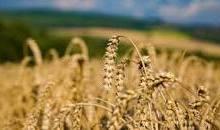 Photo of زراعة 431 ألف فدان محصول شتوي بالوادي الجديد