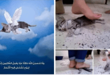 Photo of الكشف عن قصة فيديو تعذيب قطة بشكل وحشي على يد فتاتين