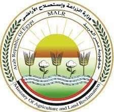 Photo of الزراعة توافق على تمويل جديد لمشروع البتلو بـ 306 مليون جنيه لصغار المربيين والمزارعين