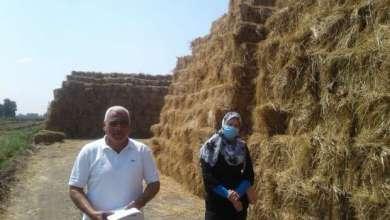 Photo of الزراعة: جمع وتدوير أكثر من 787 ألف طن قش الأرز وتنظيم 653 ندوة ارشادية