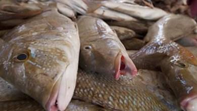 Photo of إنخفاض كبير في سعر الأسماك اليوم