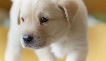 Photo of دراسة جديدة… الكلاب يمكنها اكتشاف كورونا في أقل من ثانية واحدة