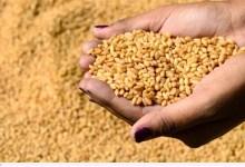 """Photo of """"الزراعة"""": استمرار العمل بمحطات التقاوي على مستوى الجمهورية"""