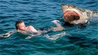 Photo of بدء «عمليات تمشيط واسعة للشاطئ».. سمكة قرش تهاجم شخصاً في الساحل الشمالي