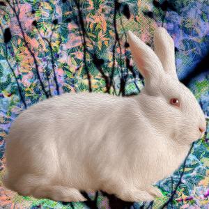 white.Rabbit (day 06), NFT / Print series, naccarato, 2021