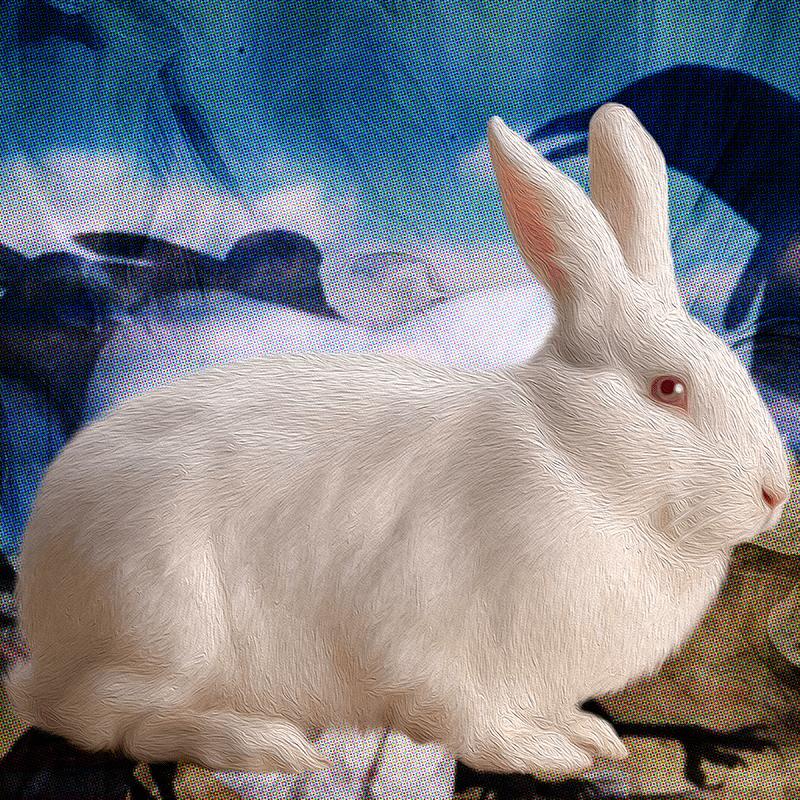 white.Rabbit (day 08), NFT / Print series, naccarato, 2021