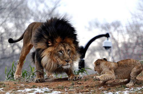 leon-limites