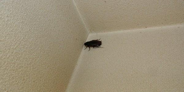 飲食店のゴキブリ対策!お客様とのトラブルにならないように