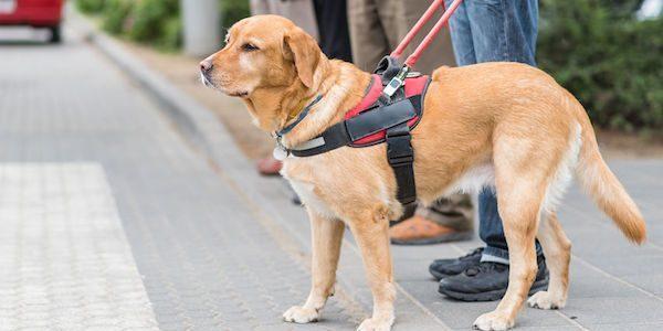 飲食店における盲導犬や聴導犬への対応やサービスは?
