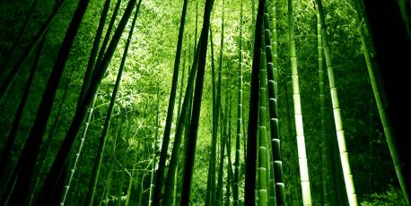 bambu-458x2301