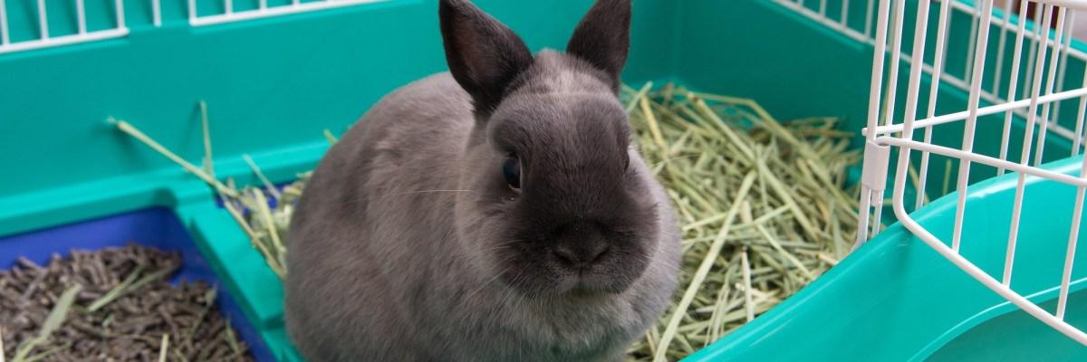 https nac magazine com 2019 01 13 mon lapin a un comportement bizarre dans sa cage