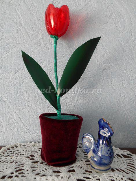 Hoa tulip sáng.