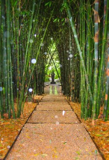 Bamboo walkways