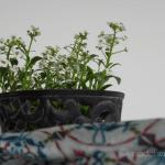Pflanze mit weißen Blumen