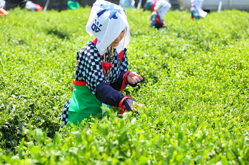 新茶を飲みながら感じたい日本の原風景