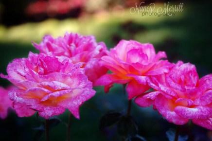 cff_pin_magenta_flowers_nmp