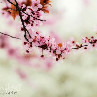 A Photo a Week Challenge: Spring