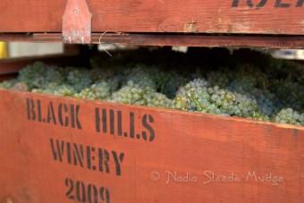 #205 Black Hills grapes DSC_9542