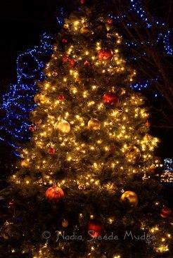 #235 Granville Island Christmas Tree DSC_0141