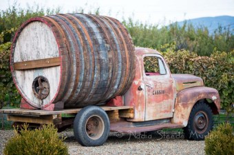 Loved these old farm trucks at Cassini Cellars!