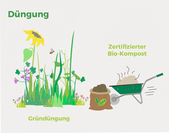 wirgarten_illustration_gru%cc%88ndu%cc%88ngung_580px