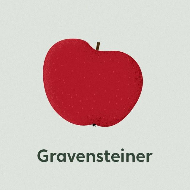 Illustrierte Apfelsorten Gravensteiner