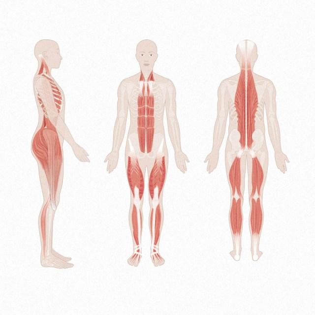 Faszientraining Faszienketten im Körper