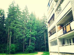 Früher war hier überall dichter Wald