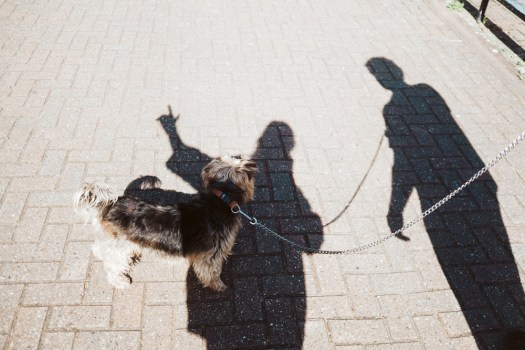 Shadow stories selfie with dog and man