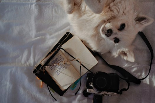 notebook to learn from mistakes and dog