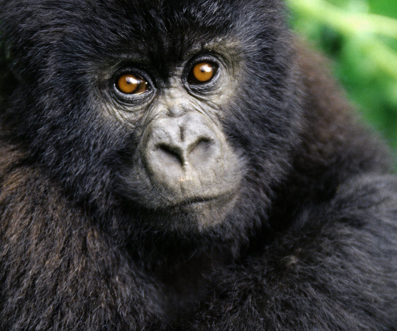 Helping people. Saving #gorillas