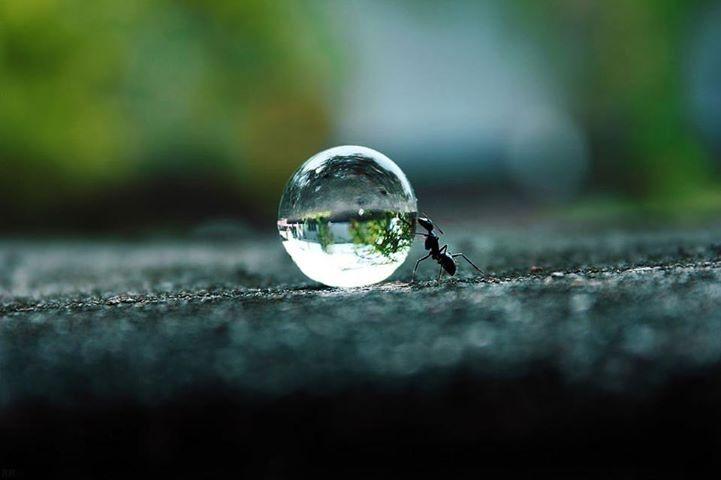 Las enseñanzas de la hormiga negra #sersiendo