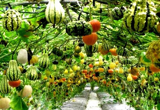 pertanian-sayur.foto_.desain-minimalis.670