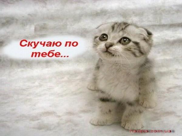 Скучаю по тебе с котом | Картинки с надписями, прикольные ...