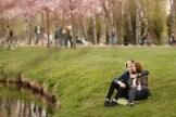 Фотосессия влюблённых в парке с сакурами в Риге